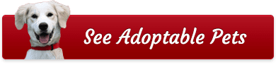 See Adoptable Pets button